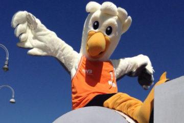 Mondiali 2015: L'Olanda ha scelto come mascotte un gabbiano di nome Spike