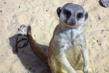 I racconti del Coach: Dai maiali di Haiti agli scoiattoli di Londra
